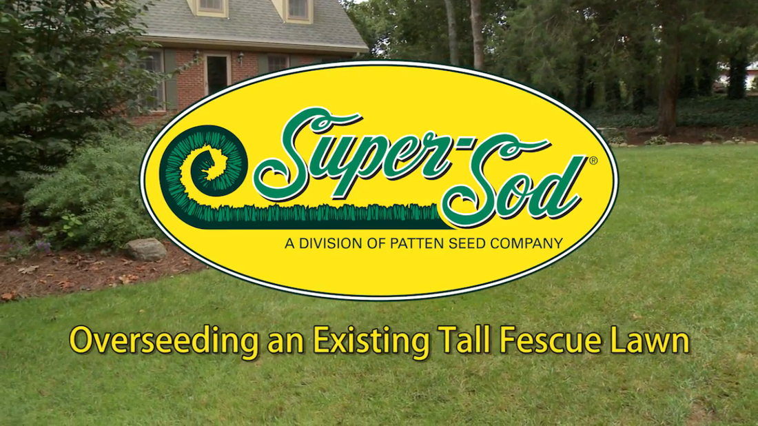 Super-Sod Overseeding